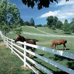 chevaux clo