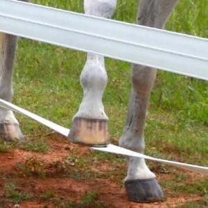 chevauxclo2